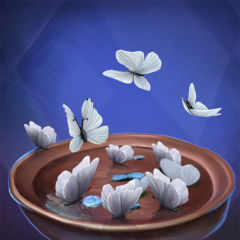 Schmetterlingssammler